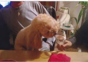 le petit chien de Marielle(1)