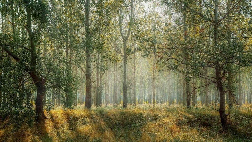 forêt nature